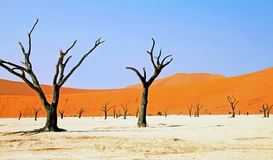 Namibia Sossusvlei, döda Vlei Royaltyfri Fotografi
