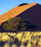 Namibia - Sossusvlei sand dune. Early morning sun on a sand dune at Sossusvlei in the Namib Desert within the Namib-Naukluft National Park in Namibia Stock Photos