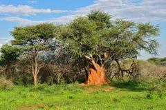 Namibia, termite mound Royalty Free Stock Photos