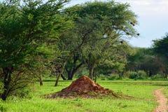 Namibia, termite mound Stock Photo