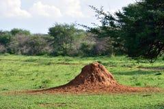 Namibia, termitu kopiec Obrazy Stock
