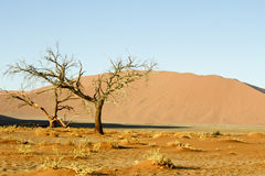 Namibian desert dunes highlighted by sunrise. With silhoutted tree in foreground. This desert is the oldest in the world completely devoid of surface water stock images
