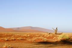 Namibian desert dunes highlighted by sunrise Royalty Free Stock Images