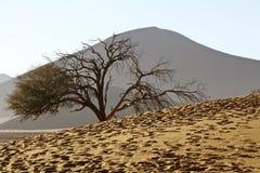 Namibian desert dunes highlighted by sunrise Royalty Free Stock Photos