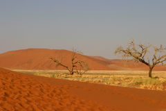 Namibian desert landscape. Scenic landscape of Namibian desert with dead trees in foreground royalty free stock image