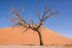 Namibian Desert Landscape Royalty Free Stock Photos
