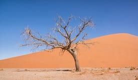 Namibian Desert Landscape Royalty Free Stock Images