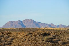 Desert landscapes with mountains in the south of Namibia and two inconspicuous yellow birds. The dry season royalty free stock photos