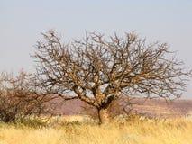 Namibian landscape Royalty Free Stock Photo
