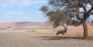 Namibian landscape. Image of a namibian landscape Royalty Free Stock Image