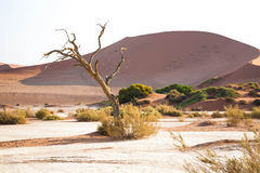 A namibian landscape Royalty Free Stock Images