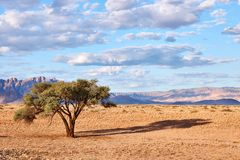 Namibian landscape with tree. Namibian landscape with a tree in the desert Royalty Free Stock Image