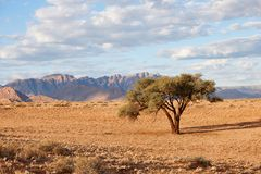Namibian landscape with tree Royalty Free Stock Image