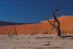 Namibian landschap Royalty-vrije Stock Fotografie