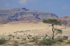 Namibian landschaps droge woestijn stock afbeelding