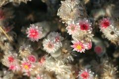 Namibian Plant Royalty Free Stock Image