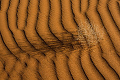 Namibian sand dune Royalty Free Stock Photo