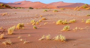 Namibian sand dunes Royalty Free Stock Photography