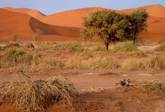 Namibian sand dunes Royalty Free Stock Photo
