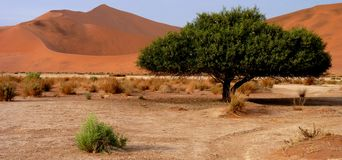 Namibian sand dunes Stock Photos