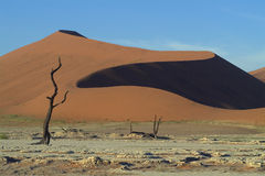 Namibian Sanddunes 1. Picture of dead trees ans sanddunes taken near Deadvlei, Namibia Royalty Free Stock Images