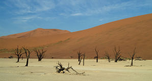Namibian Sanddunes 2 Royalty Free Stock Photos