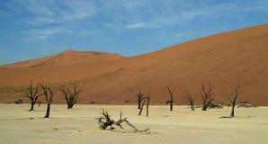 Namibian Sanddunes 2. Picture of dead trees ans sanddunes taken near Deadvlei, Namibia Royalty Free Stock Photos