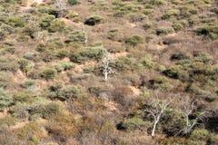Namibian savanna woodlands view from the top of Waterberg Platea Stock Photos