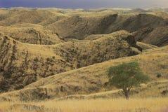 Namibian woestijnlandschap Stock Afbeeldingen