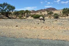 Namibijska przyroda, Afryka Zdjęcia Royalty Free