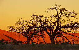 Namibijski Zmierzch - Sossusvlei obrazy stock