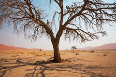 Namibische Wüste stockfoto
