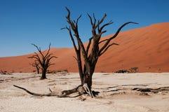 Namibische Wüste lizenzfreies stockfoto