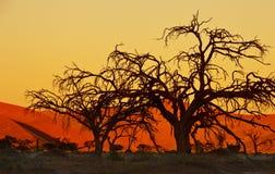 Namibisk solnedgång - Sossusvlei Arkivbilder