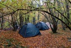 namiotów trzy mokry drewno Fotografia Royalty Free