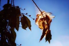 Namiotowych gąsienic światło słoneczne Obraz Royalty Free