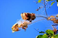 Namiotowych gąsienic niebieskie niebo Fotografia Stock