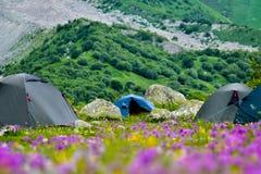 Namiotu obóz na gazonie Zdjęcie Royalty Free