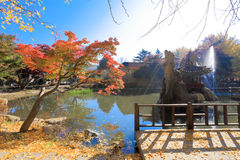 Namiseom海岛在秋天 免版税库存图片