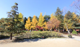 Namiseom海岛在秋天 免版税图库摄影