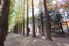 Namiseomeiland in de herfst Stock Fotografie