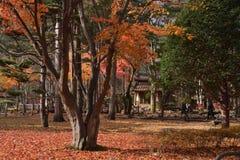 Namisum Island South Korea maple red leaf. Nami Island South Korea Autumn leaf Maple stock image