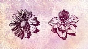 namn av den gamla blomman Royaltyfria Bilder