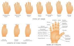 Namn av fingrarna Arkivfoton