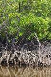 Namorzynowi drzewa Zdjęcie Royalty Free