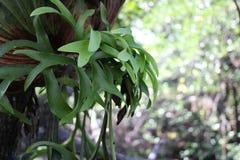 Namorzynowi lasów liście Zdjęcia Stock
