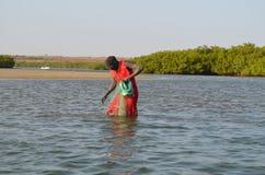 Namorzynowi lasy w Saloum delty rzecznym terenie, Senegal, afryka zachodnia Fotografia Stock