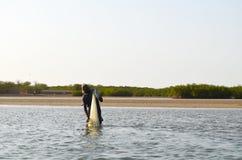 Namorzynowi lasy w Saloum delty rzecznym terenie, Senegal, afryka zachodnia Fotografia Royalty Free