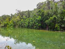Namorzynowy bagno Tha Pom Khlong Pieśniowy Nam Krabi Tajlandia zdjęcia stock