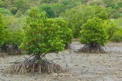 namorzynowy drzewo zdjęcia royalty free